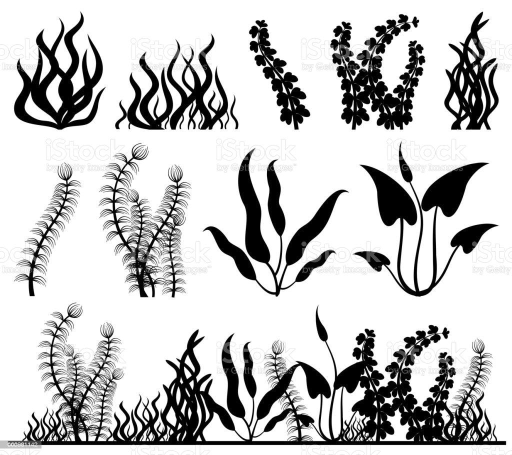 Line Drawing Kelp : Sea plants and aquarium seaweed vector set stock