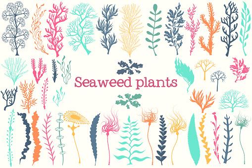Sea plants and aquarium seaweed vector set.