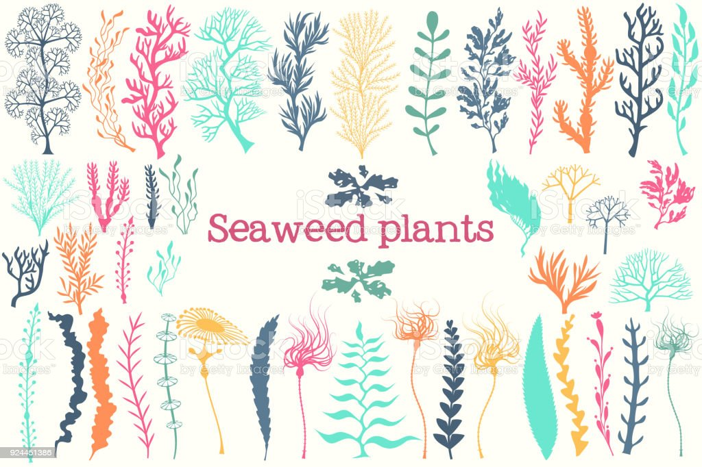 Las plantas marinas y algas de acuario vector conjunto. - ilustración de arte vectorial