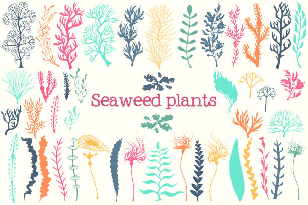 stockillustraties, clipart, cartoons en iconen met zee-planten en aquarium zeewier vector set. - zeewier