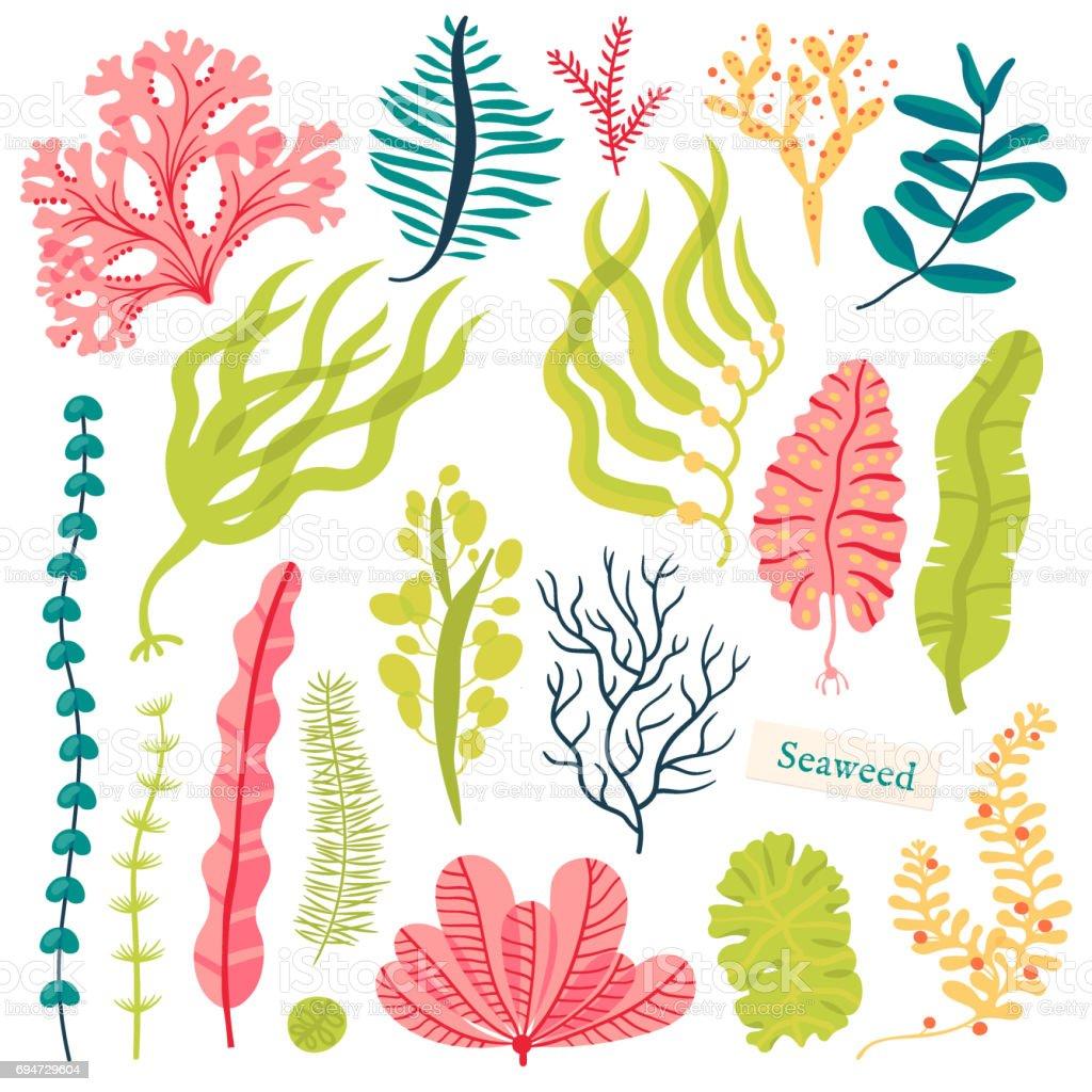 Las plantas marinas y algas marinas acuáticas. Alga marina establece ilustración vector aislado en blanco - ilustración de arte vectorial