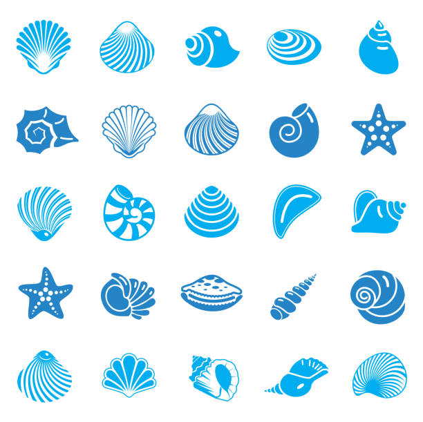 Sea Shell icons set blue on white background for graphic and web design. Simple vector sign. Internet concept symbol for website button or mobile app. Sea Shell icons set blue on white background for graphic and web design. Simple vector sign. Internet concept symbol for website button or mobile app nautilus shell stock illustrations