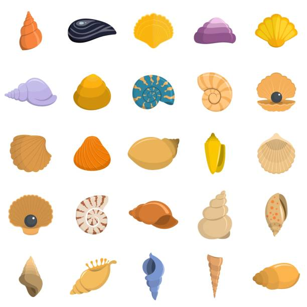 stockillustraties, clipart, cartoons en iconen met sea shell pictogrammen instellen vector geïsoleerd - zeeschelp