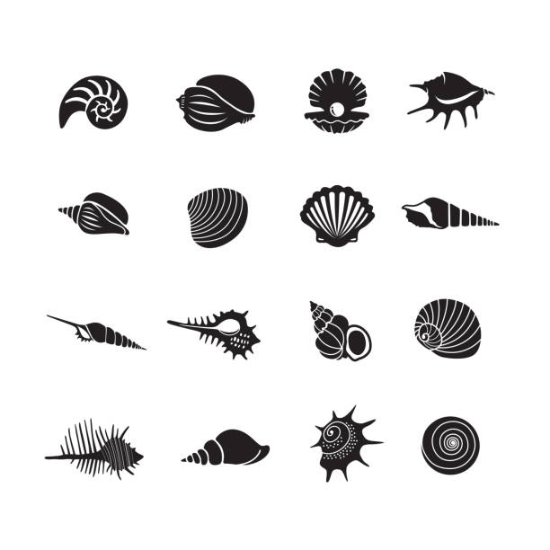 stockillustraties, clipart, cartoons en iconen met sea shell iconen - zeeschelp