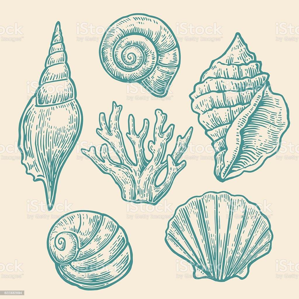 Sea shell. Set color engraving vintage illustrations. vector art illustration