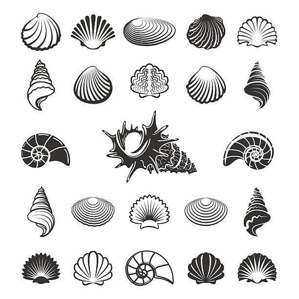 sea shell silhouettes - seashell stock illustrations, clip art, cartoons, & icons