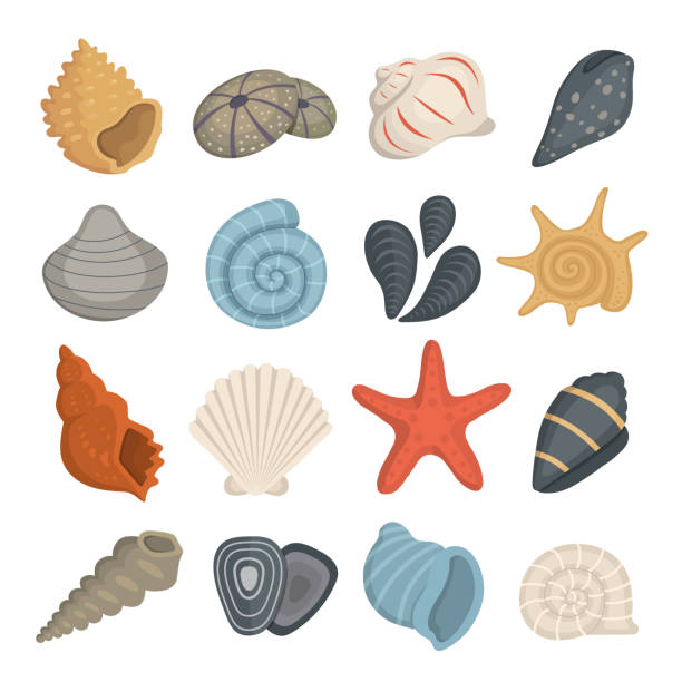 Sea shell vector icons in cartoon style. Set of clam mollusc. Ocean cockleshell. Sea shell vector icons in cartoon style. Set of clam mollusc. Ocean cockleshell animal shell stock illustrations