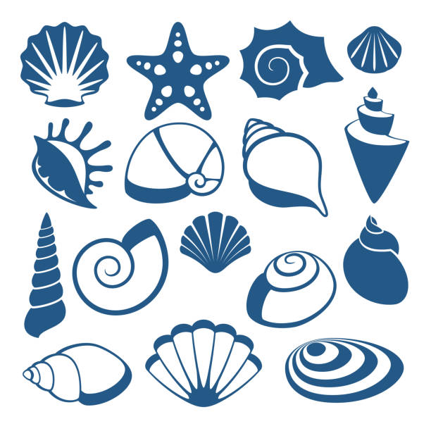 stockillustraties, clipart, cartoons en iconen met sea shell vector silhouet pictogrammen - zeeschelp