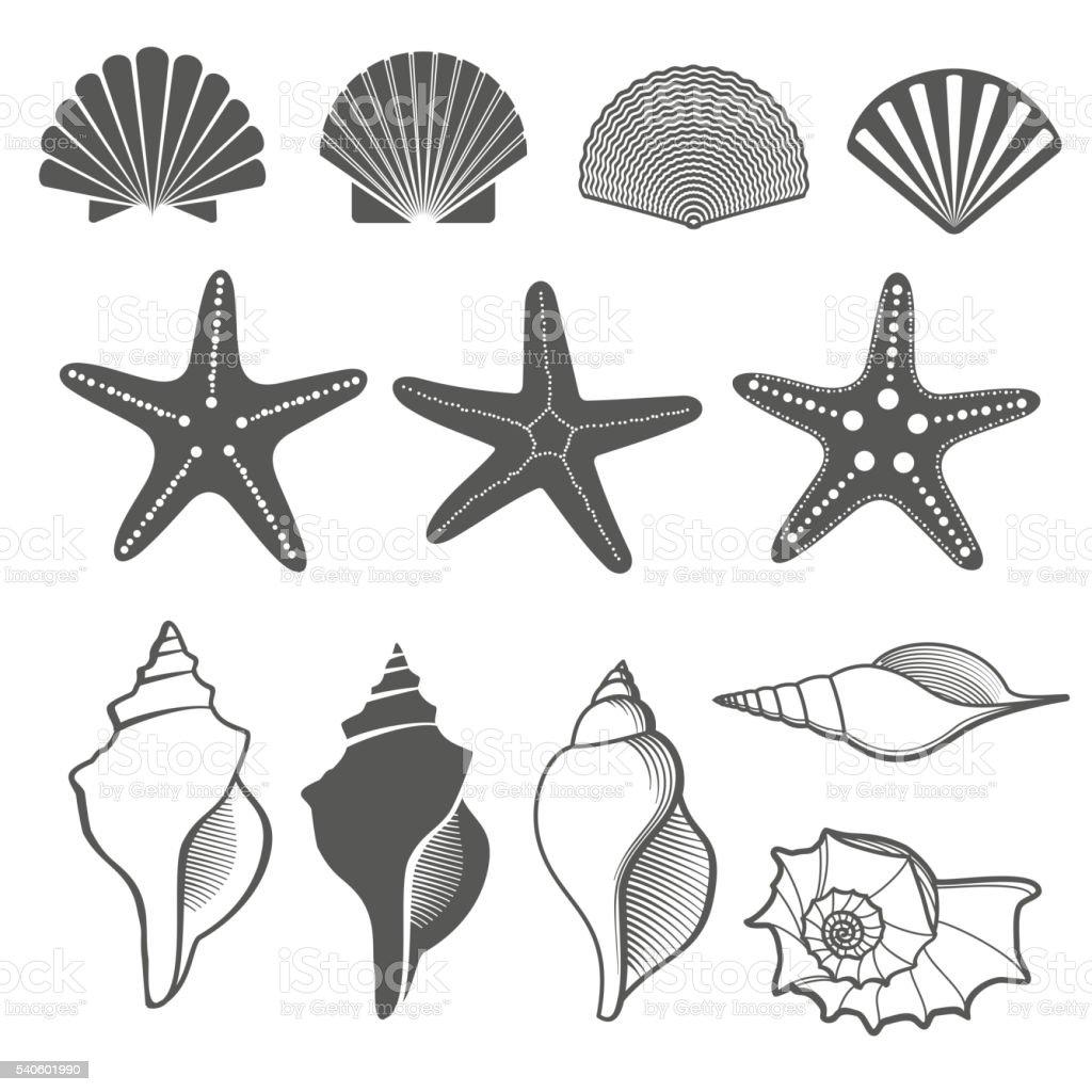 Sea shells and starfish vector set vector art illustration