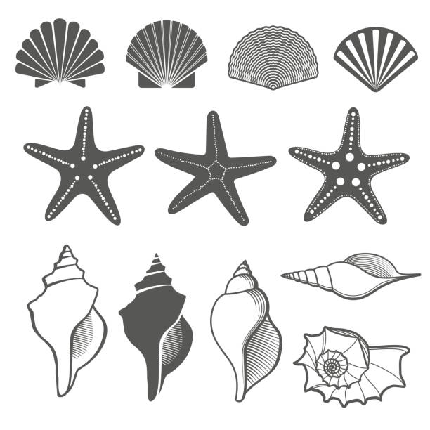 sea shells and starfish vector set - seashell stock illustrations, clip art, cartoons, & icons