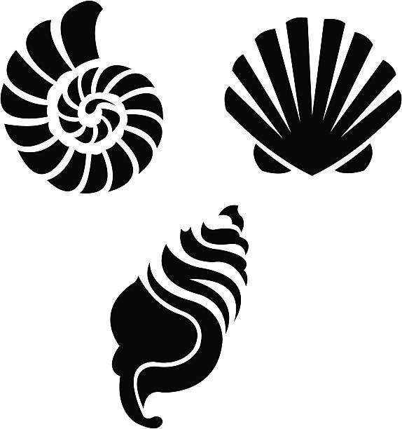 sea shells - beach - animal shell stock illustrations, clip art, cartoons, & icons
