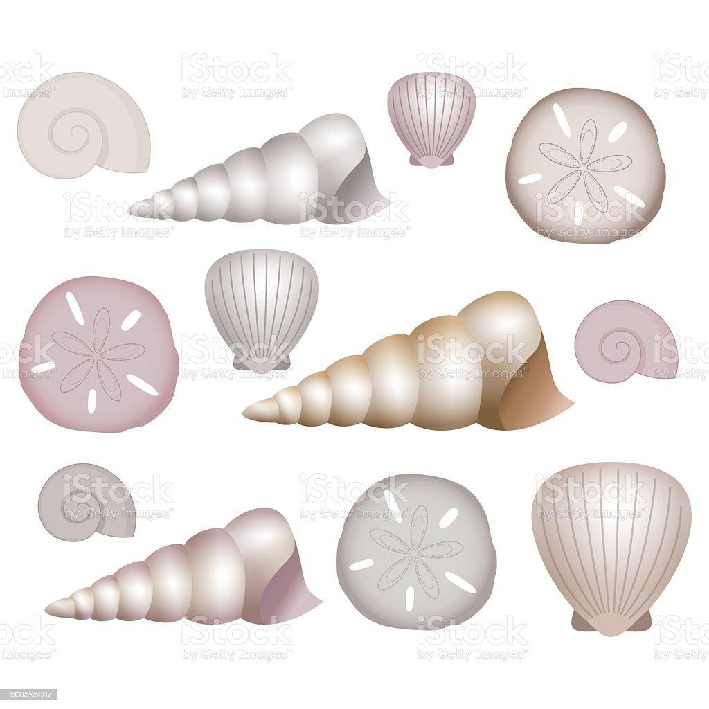 Sea Shells Illustrations. royalty-free stock vector art