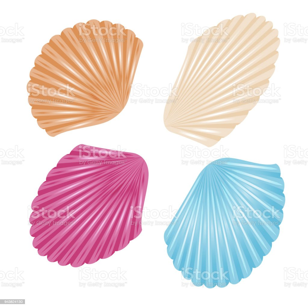 Sea Shells On White Background To Decorate Tourist Posters Flyers Booklets Notebooks Websites Stock Illustration Download Image Now Istock