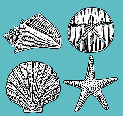 Sea Shells, Sand Dollar