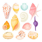 Sea shells set. Shell of a marine animal, mollusc found in the deep sea, natural underwater decoration. Vector illustration on white background