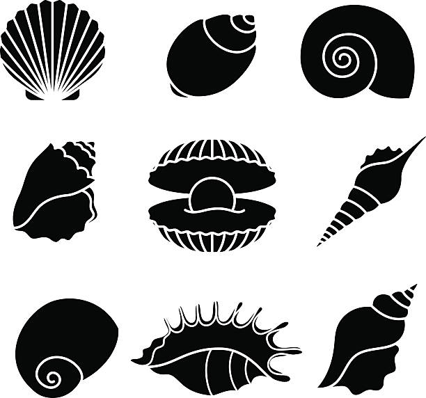 sea shells silhouettes isolated on white - seashell stock illustrations, clip art, cartoons, & icons