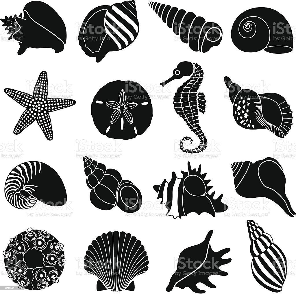sea shells vector art illustration