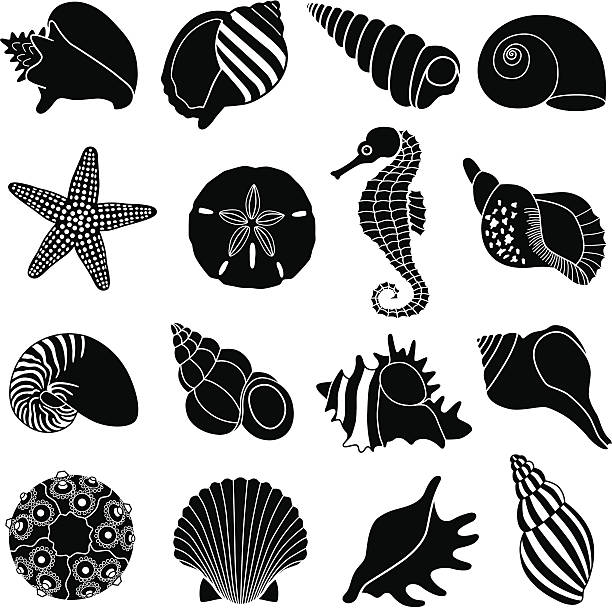 sea shells - seashell stock illustrations, clip art, cartoons, & icons