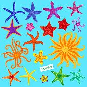 Sea stars set. Multicolored starfish. Starfishes underwater invertebrate animal. Vector illustration