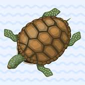 Sea turtle cartoon animal sea wildlife ocean green underwater swim reptile vector illustration. Hawaii tropical aquatic marine wild cute nature character funny mascot.
