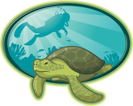 Sea Turtle Diver