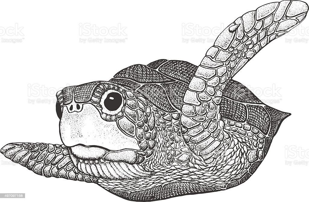 Sea Turtle Engraving Illustration vector art illustration