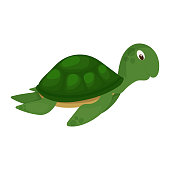 Sea turtle green ocean animal nature underwater wildlife marine character vector illustration. Swimming aquatic water reptile. Cartoon diving turtle.