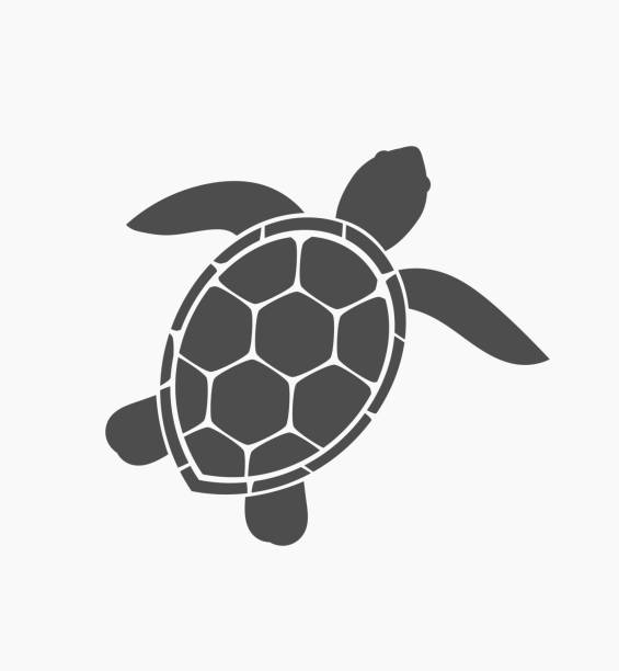 Best Sea Turtle Illustrations, Royalty-Free Vector ...