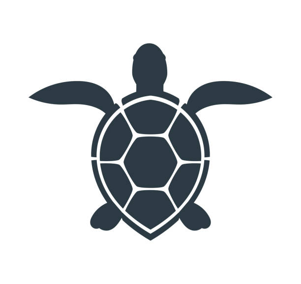 illustrazioni stock, clip art, cartoni animati e icone di tendenza di sea turtle icon. - tartaruga marina
