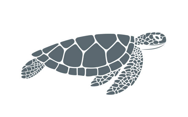 illustrazioni stock, clip art, cartoni animati e icone di tendenza di sea turtle. isolated turtle on white background. reptile - tartaruga marina