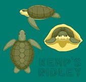 Sea Turtle Kemp's Ridley Cartoon Vector Illustration