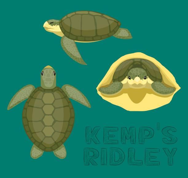 sea turtle kemp's ridley cartoon vector illustration - turtle stock illustrations
