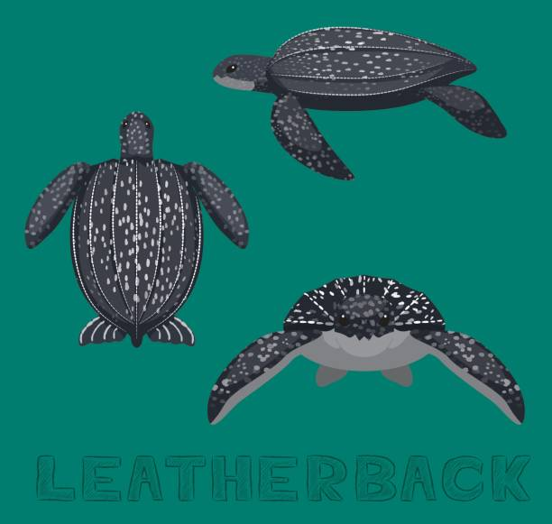 stockillustraties, clipart, cartoons en iconen met zee schildpad leder cartoon vector illustratie - leatherback