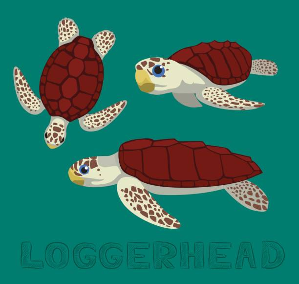 illustrazioni stock, clip art, cartoni animati e icone di tendenza di sea turtle loggerhead cartoon vector illustration - tartaruga comune