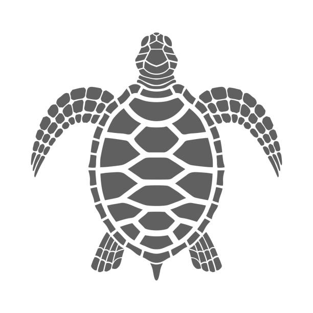 illustrazioni stock, clip art, cartoni animati e icone di tendenza di sea turtle - tartaruga marina