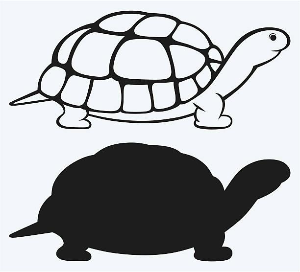 Sea turtle Sea turtle isolated on blue background turtle stock illustrations