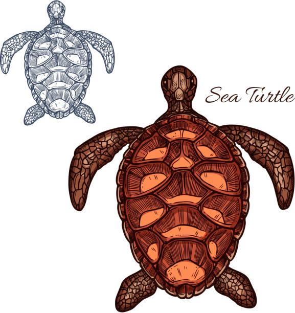 illustrazioni stock, clip art, cartoni animati e icone di tendenza di sea turtle vector isolated icon - tetrade