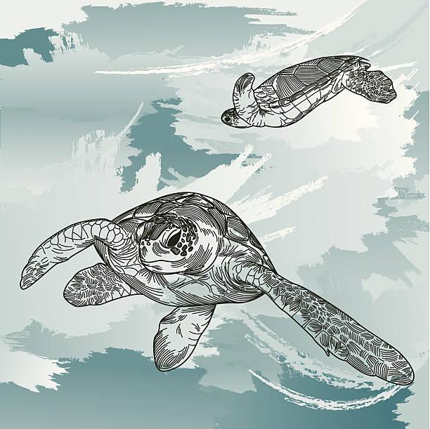 Sea Turtles Underwater vector art illustration