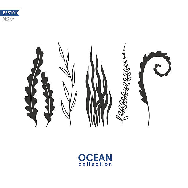 stockillustraties, clipart, cartoons en iconen met sea weed and water plants - zeewier