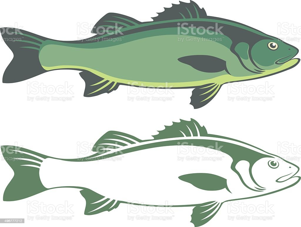seabass vector art illustration