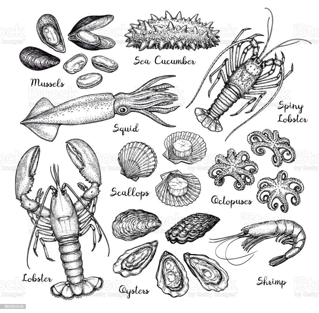 Seafood big set. vector art illustration