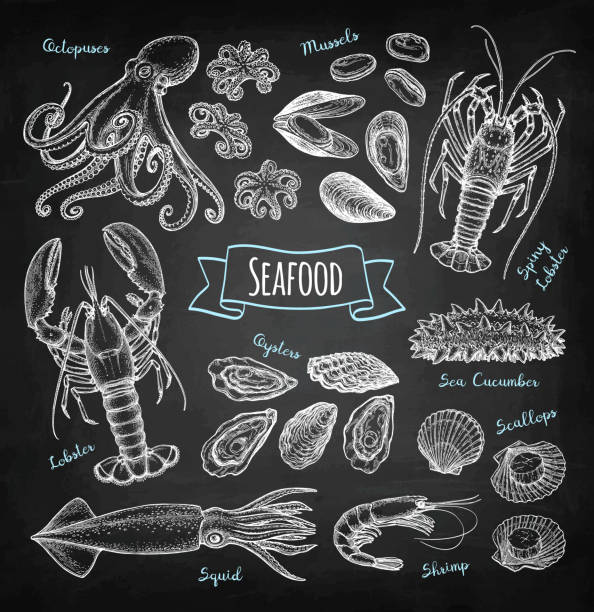 Seafood chalk sketch Seafood big set. Chalk sketch on blackboard background. Hand drawn vector illustration. Retro style. seafood stock illustrations