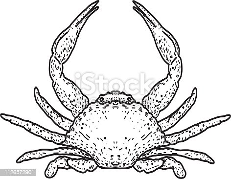 Vector illustration of  Seafood. Hand drawn crab. Sample placement text. Easy to edit with layers.