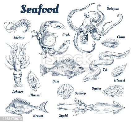 Seafood poster and species with headlines and types of marine dwellers. Crab and lobster, shells and squid. Octopus and bass fish vector illustration
