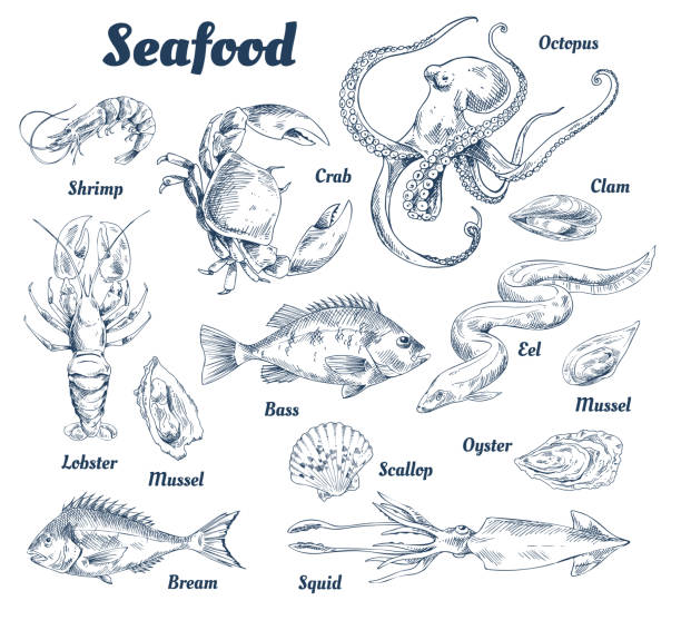 Seafood Poster and Species Vector Illustration Seafood poster and species with headlines and types of marine dwellers. Crab and lobster, shells and squid. Octopus and bass fish vector illustration seafood stock illustrations