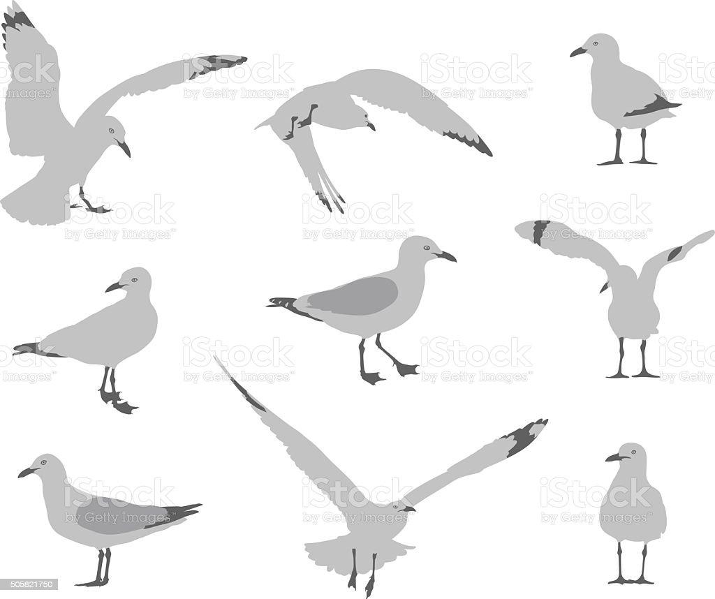 Seagull Behaviour vector art illustration