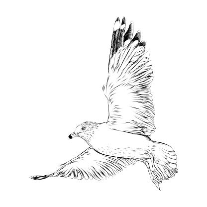 Seagull Drawn in Pen and Ink. EPS10 Vector Illustration
