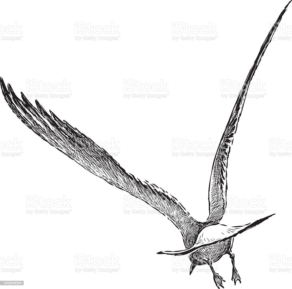 seagull flies away vector art illustration