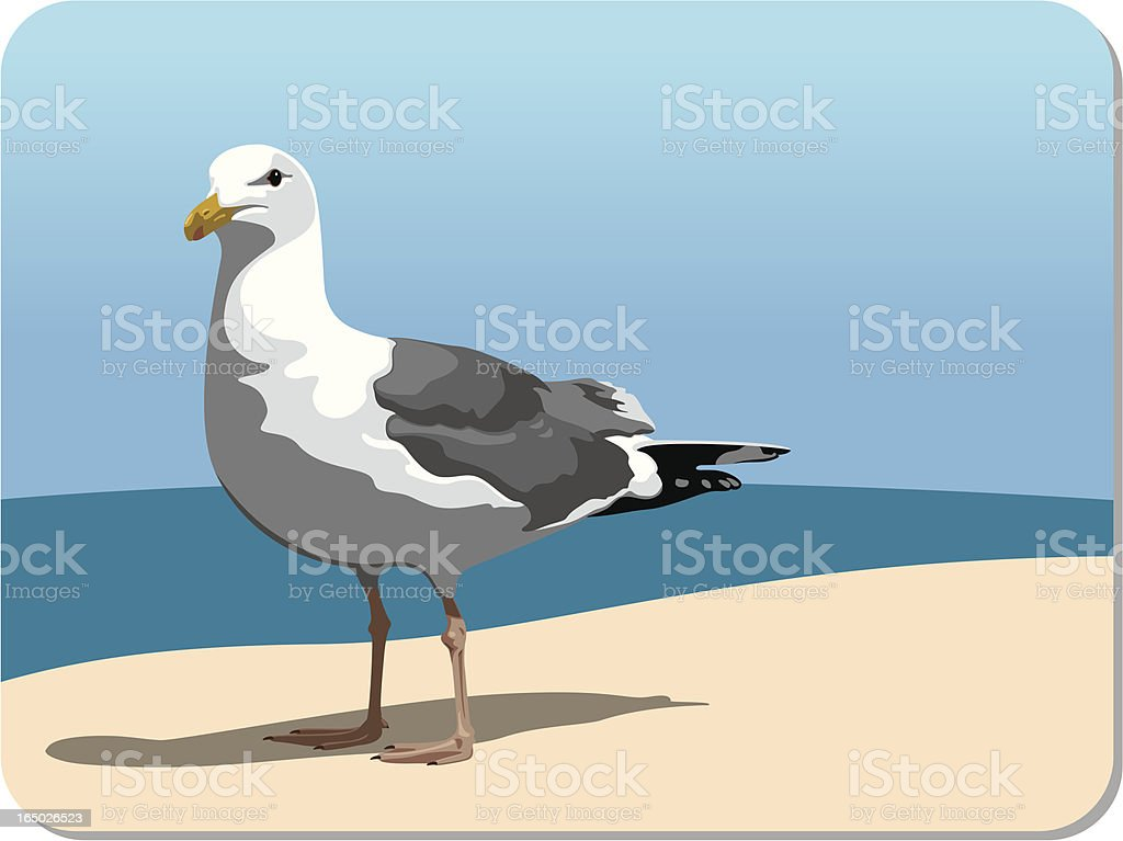 Seagull on the shore (vector) royalty-free stock vector art