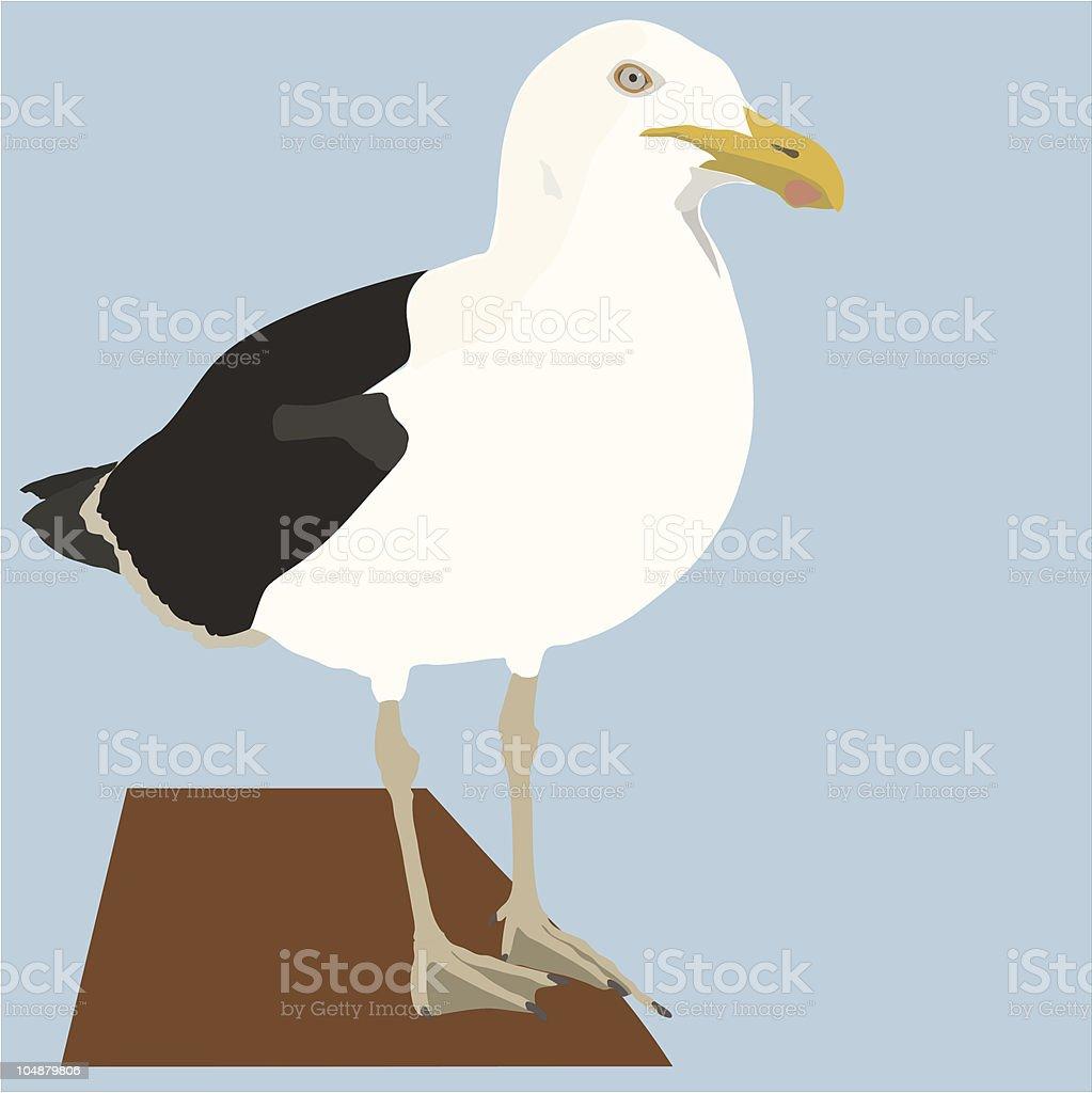 Seagull or Kelp Gull (Vector) vector art illustration